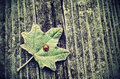 Vintage photo of ladybug on green leaf a Stock Photos