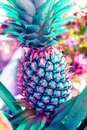 Vintage  pineapple pastel color to Creative  pattern and texture