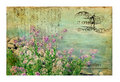 Vintage Postcard with Flowers Royalty Free Stock Image