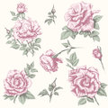 Vintage rose collection flower set hand draw elements for you design and scrapbooking Stock Image