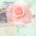 Vintage rose painted with brush stroke on wall background Royalty Free Stock Image