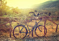 Vintage rustic bicycle with basket Royalty Free Stock Photo