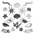 Vintage sea shells, starfish, seaweed, coral and waves. Royalty Free Stock Photo