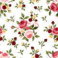 Vintage seamless pattern with roses red pink and yellow english rose buds and leaves on white Royalty Free Stock Image