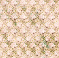 Vintage shabby pink chic rose background texture Royalty Free Stock Photo
