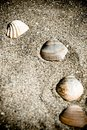 Vintage shells on the sand Stock Photos