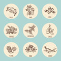 Vintage style icons with popular hand drawn spices