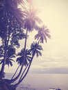 Vintage stylized tropical beach with palm tree at sunset