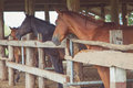 Vintage tone of Horses in the old barn Royalty Free Stock Photo