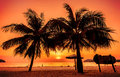 Vintage toned picture of palms silhouettes against sunset. Royalty Free Stock Photo