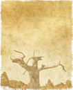 Vintage Tree on Paper Stock Photography