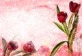 Vintage tulip Royalty Free Stock Photo