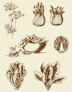 Vintage vegetables set of vector hand drawn Stock Photos