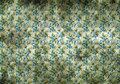 Vintage wallpaper with little blue flowers background texture of stained discoloured grunge a repeat pattern of Royalty Free Stock Image