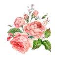 Vintage watercolor pink english roses