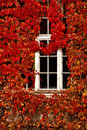 Vintage white window and red leaves old covered by ivy in autumn Royalty Free Stock Photo