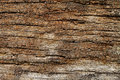 Vintage wood texture, abstract background, grunge Royalty Free Stock Photo