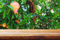 vintage wooden board table in front of dreamy pomegranate tree landscape