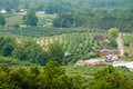 Vinyard in a distance of virginia mountains Royalty Free Stock Photo
