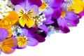 Viola flowers border Royalty Free Stock Photo