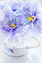 Viola flowers photo of a beautiful Royalty Free Stock Photography