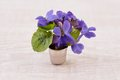 Viola odorata bouquet of violet flowers on wooden background card with flower with copy space Royalty Free Stock Photo