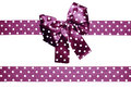 Violet bow and ribbon with white polka dots made from silk Royalty Free Stock Photo