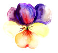 Violet flower blossoming watercolor illustration Stock Images