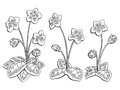 Violet flower graphic black white isolated sketch illustration