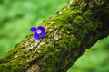 Violet flower on the tree bark composition with Royalty Free Stock Photo