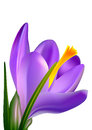 Violet flower vector illustration Stock Image