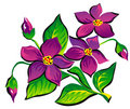 Violet Flowers (Vector) Royalty Free Stock Image