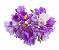 Violet freesias flowers posy isolated on white background Stock Images