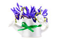 Violet iris flower with snowdrop on white background isolated Royalty Free Stock Images