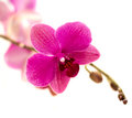 Violet orchid flower closeup of beautiful Stock Images