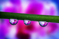 Violet orchid inside a water drop Royalty Free Stock Photo