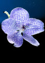 Violet orchid in water close up image of with bubbles Stock Photography