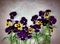 Violet pansies Royalty Free Stock Image