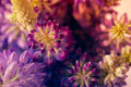 Violet and purle wild flowers macro shot Royalty Free Stock Photo