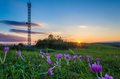 Violets in sunset light with antenna on the background a bunch of a hill warm liht of autumn and a comunnication Royalty Free Stock Photo