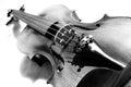 Image : Violin in black and white. hair  in