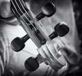 Violin details Royalty Free Stock Photos
