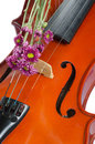 Violin And Purple Daisy