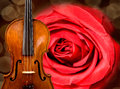 Violin and rose Stock Images