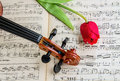 Violin and tulip Royalty Free Stock Photo