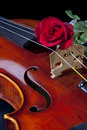 Violin Viola and Red Rose Royalty Free Stock Photos