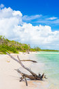 Virgin beach at coco key cayo coco in cuba old tree trunk a Royalty Free Stock Photography