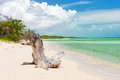 Virgin beach at coco key cayo coco in cuba old tree trunk a Royalty Free Stock Photo