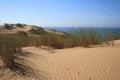 Virgin beach Sand and shrubs Royalty Free Stock Photo