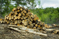 Virgin cut timber Royalty Free Stock Photos